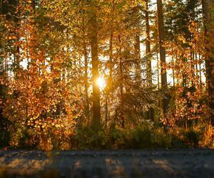 Site1835-ambiance-finlande21