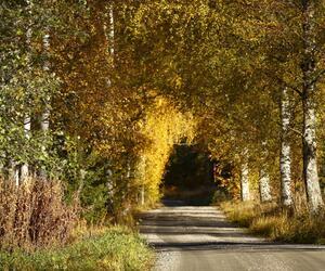 Site1836-ambiance-finlande21