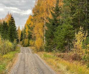 Site1839-ambiance-finlande21