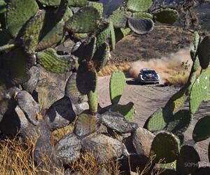Site5538-ogier-mexique18