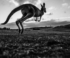 Site6839-ambiance-australie18