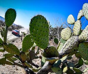 Site6709-ogier-mexique19