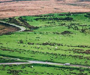 Site5456-ogier-wales18