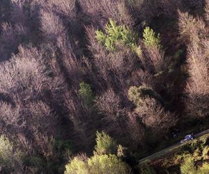 Site6621-ogier-corse17
