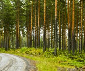 Site3835-ambiance-finlande17