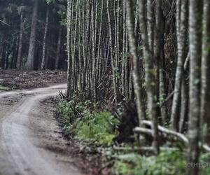 Site5834-ambiance-estonie20