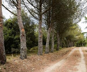 Site5856-ambiance-italie17