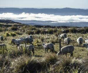 Site4826-ambiance-argentine17